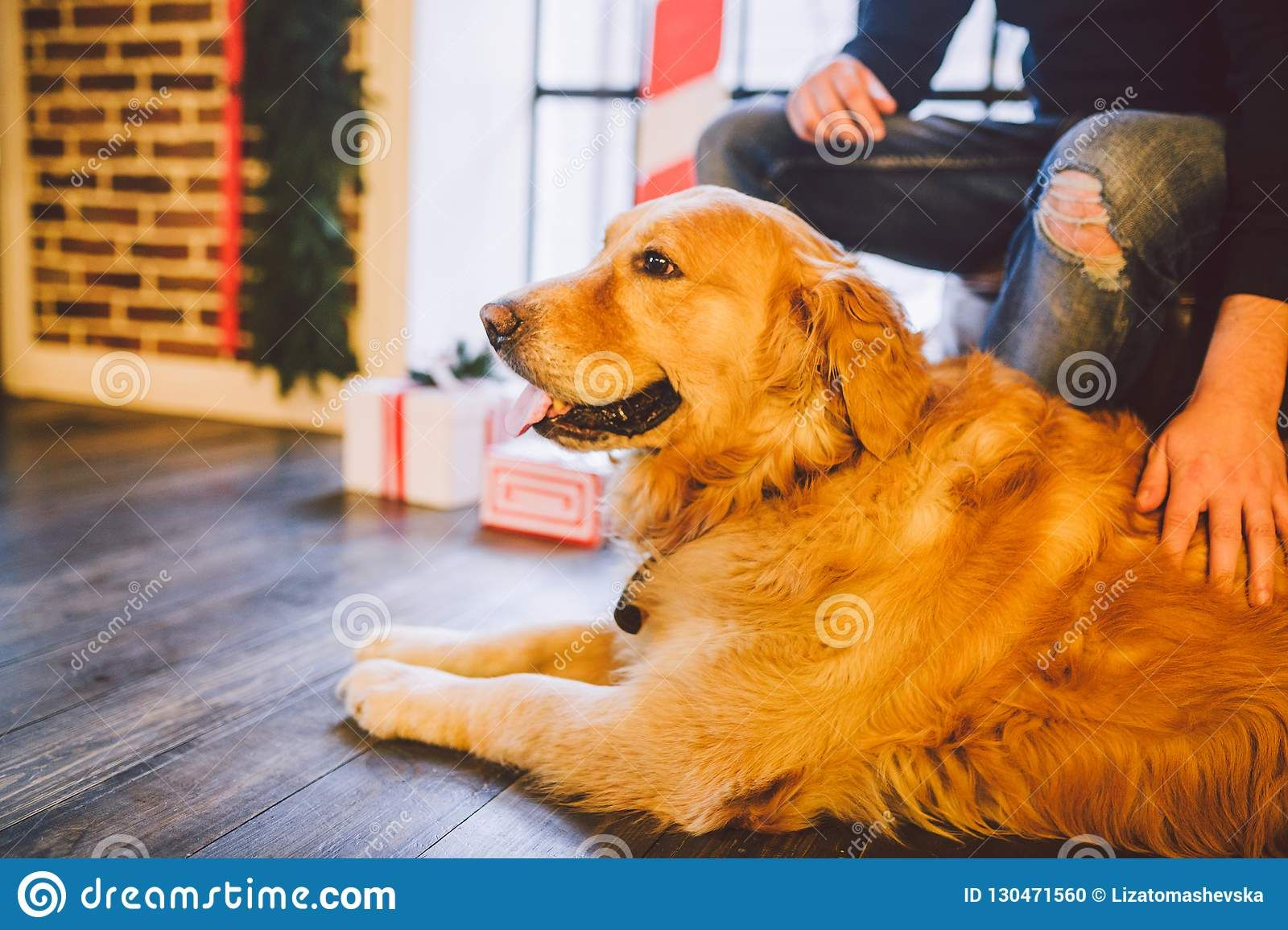 23+ Golden Retriever Dogs For Sale Near Me in 2020 Dogs