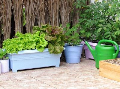 Superb How To Make Terrace Vegetable Garden