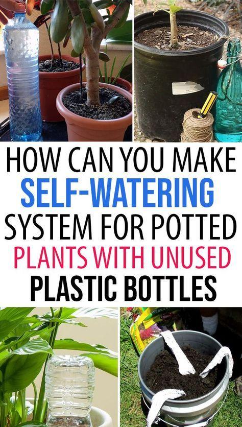 How to Make Self-Watering System for Potted Plants with Plastic Bottles? #selfwatering