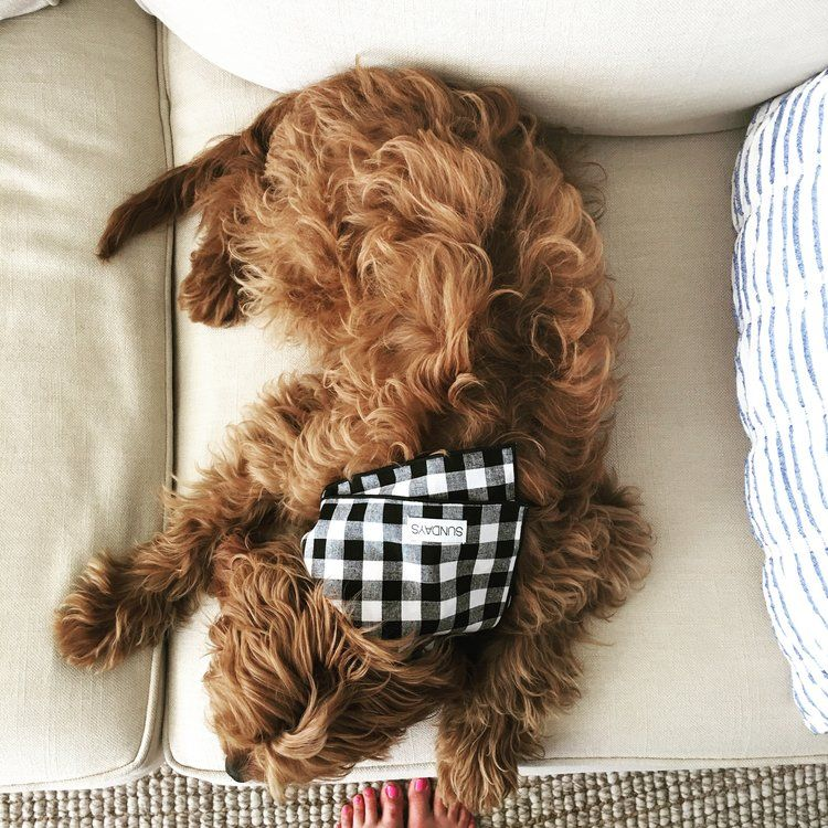 SUNDAYS Crosby the Cavapoo in the Black and White Gingham