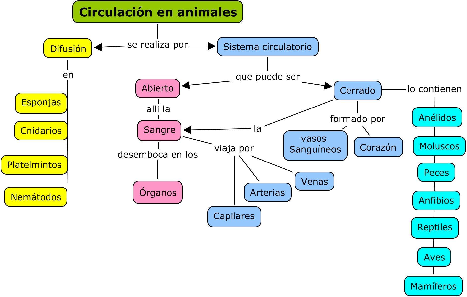Circulacion En Animales Investiciencias Com Circulacion Sistema Circulatorio Abierto Sistema Circulatorio Cerrado