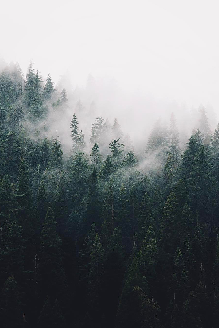 "urbanissues: ""banshy: ""Untitled by Finn Beales "" vertical landscapes "" #landscapepics"