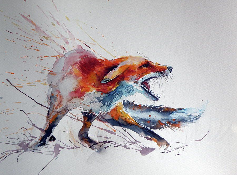 Startled Red Fox Peinture Renard Dessin Renard Et Dessin Graffiti