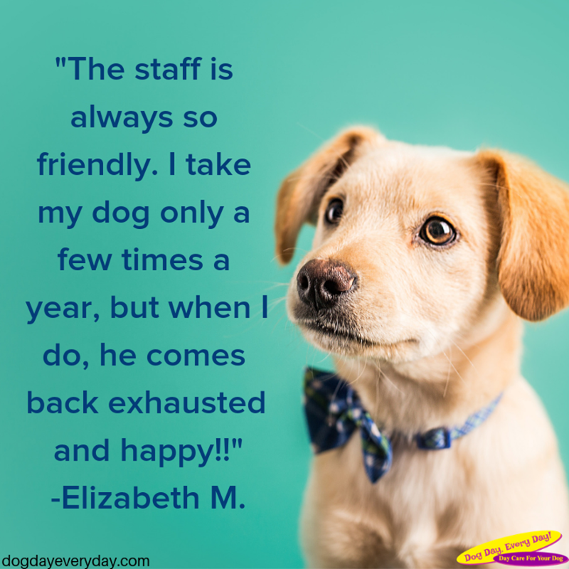 We Re Always Glad To Hear About How Happy The Dogs Are Come Back For More Fun Times With Us Any Day Dogs Petparents Pets W Dog Daycare Dog Boarding Dogs