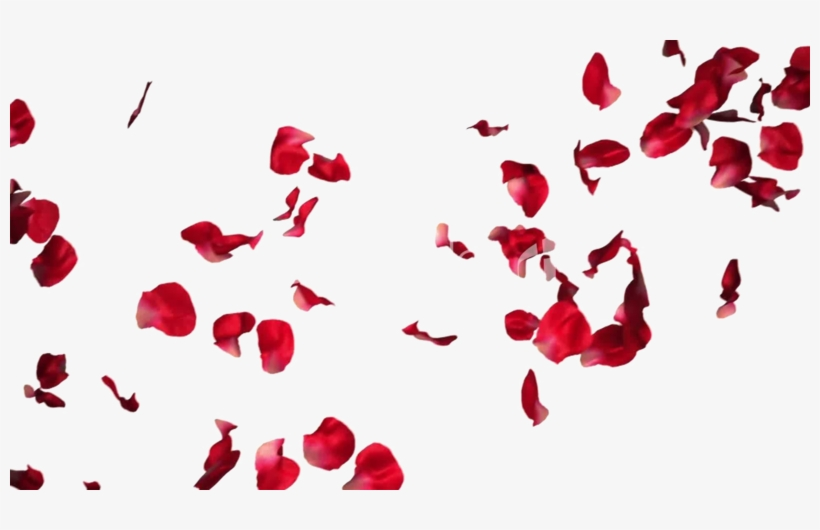 Falling Rose Petals Transparent Png Rose Petals For Photoshop Transparent Png Rose Petals Falling Red Rose Petals Petals