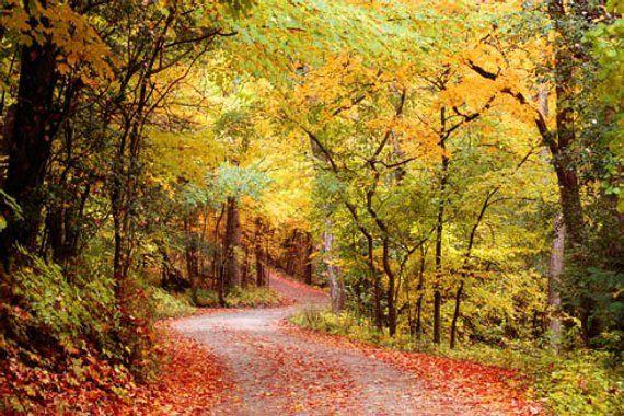 Autumn Leaves Photo, Fall Home Decor, Autumn Landscape Photo