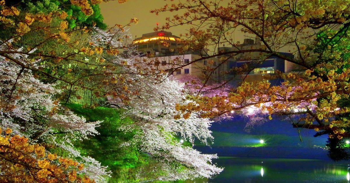Pemandangan Di Jepang Bunga Sakura Tempat Wisata Di Lembang Cari Info Tempat Wisata Di Bandung Yang Baru Halo Sahabat Travel Di 2020 Pemandangan Bunga Sakura Bunga