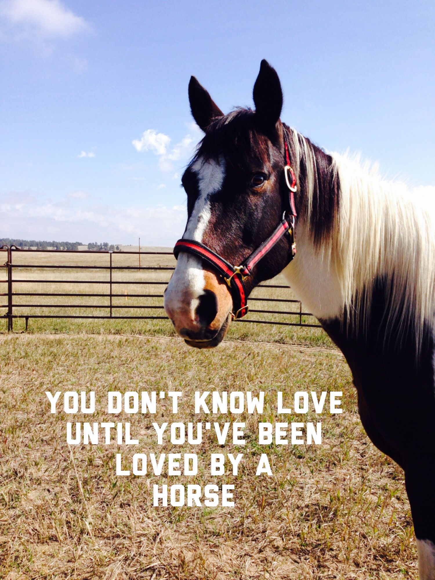 So true. This is the most beautiful and best horse ever