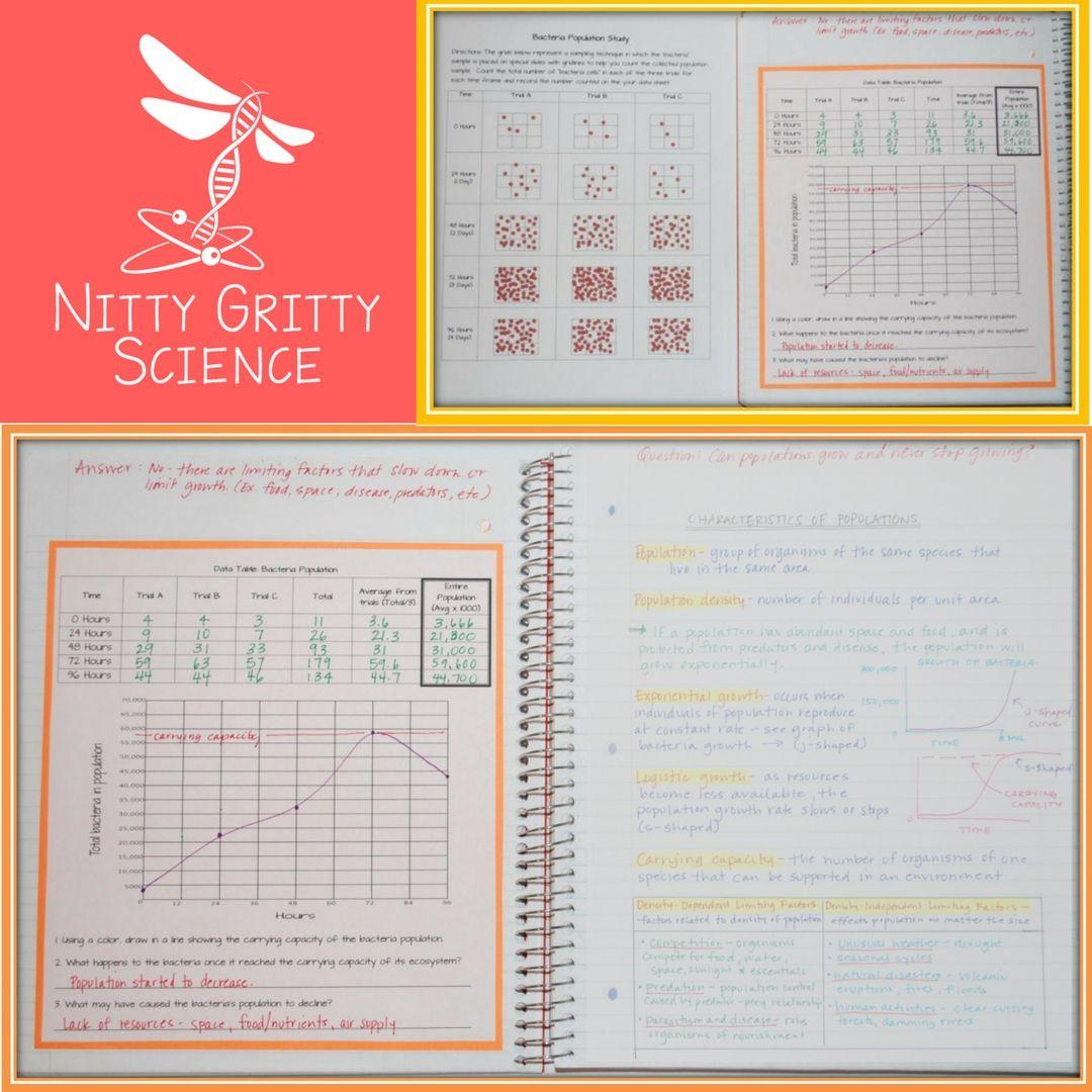 Population Dynamics Worksheet Answers - worksheet