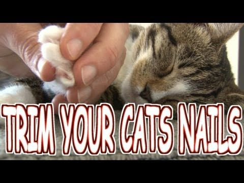 How To Trim Your Cat S Nails Tutorial This Is The Best Tutorial Hands Down Cat Nails Trim Cat Nails Cats