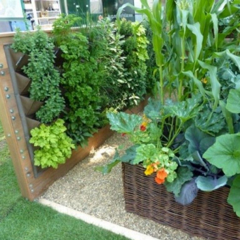 30 Amazing Ideas For Growing A Vegetable Garden In Your: 20 Best Productive Small Vegetable Garden Ideas For Your
