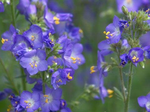 9 best flowers for garden design yard ideas flowers garden and 9 best flowers for garden design mightylinksfo Gallery