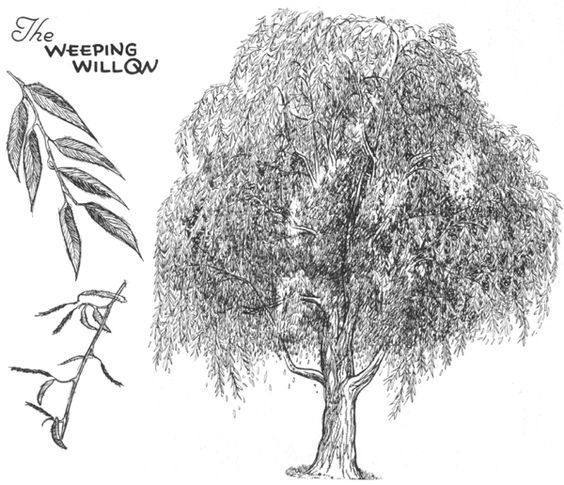 How to draw trees bark twigs leaves and foliage drawing tutorial