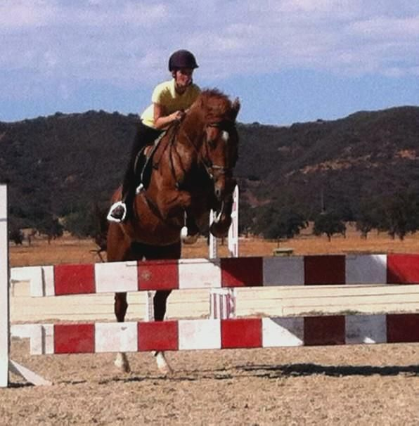Fantastic horse jumping!