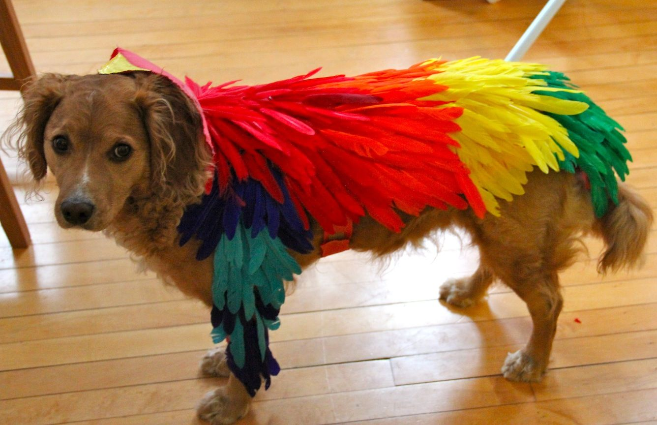 How To Make A Bird Costume For A Dog Bird Costume Cute Dog Costumes