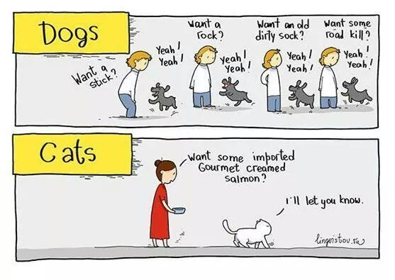 biological difference between cats and dogs