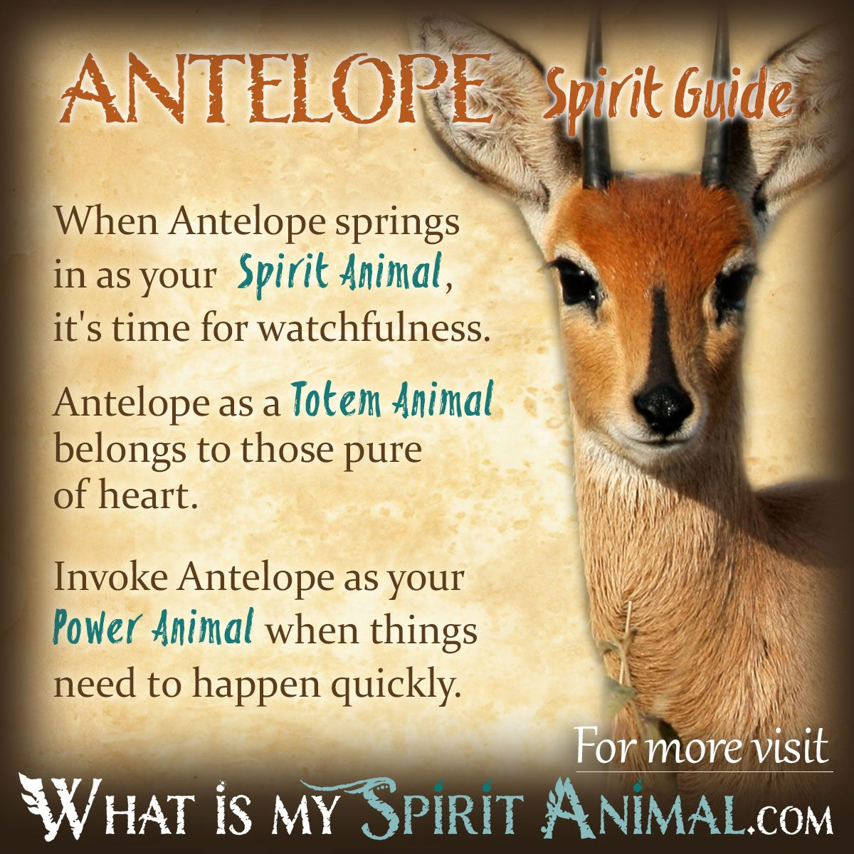 Anteater Symbolism & Meaning | ANTELOPE Symbolism & Meaning
