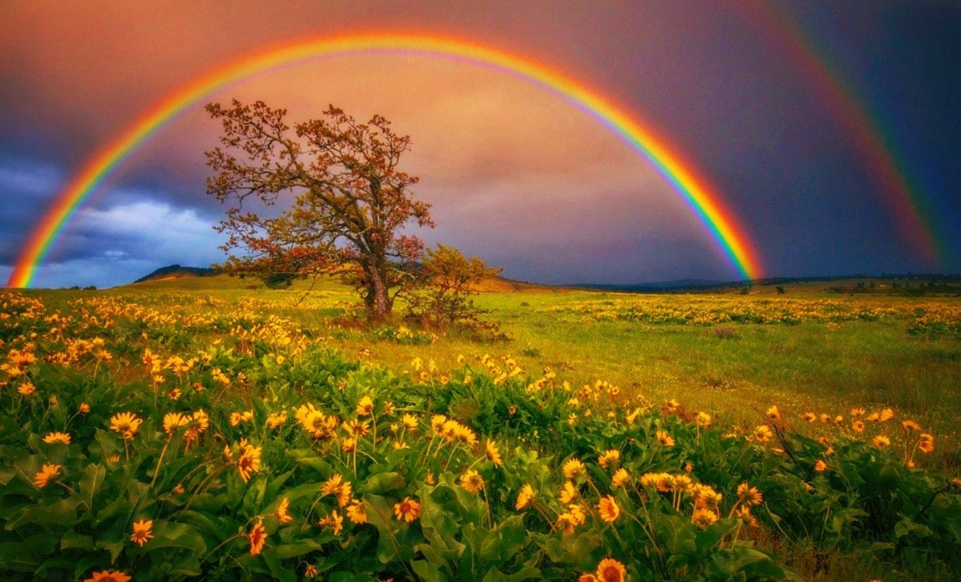 Rainbow Colors Grass Field Prism Clouds Yellow Wildflower Trees
