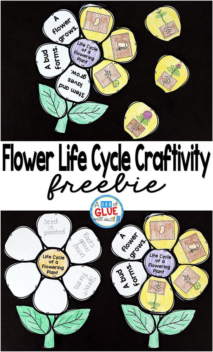Flowering Plant Life Cycle Craftivity Plant Life Cycle Plant Life Cycles Kindergarten Life Cycles Kindergarten [ 1218 x 736 Pixel ]