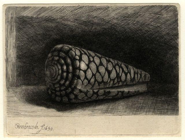 Rembrandt Exhibition Shell : Rembrandt van rijn the shell conus