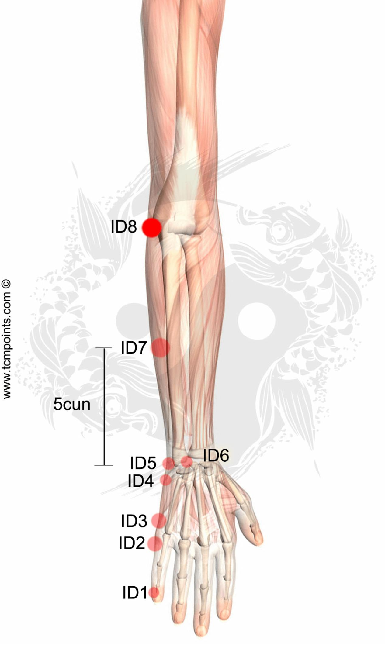 inflamacion de encias y dolor de estomago