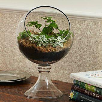 Love This Terrarium Bowl From Stonewall Kitchen Garden
