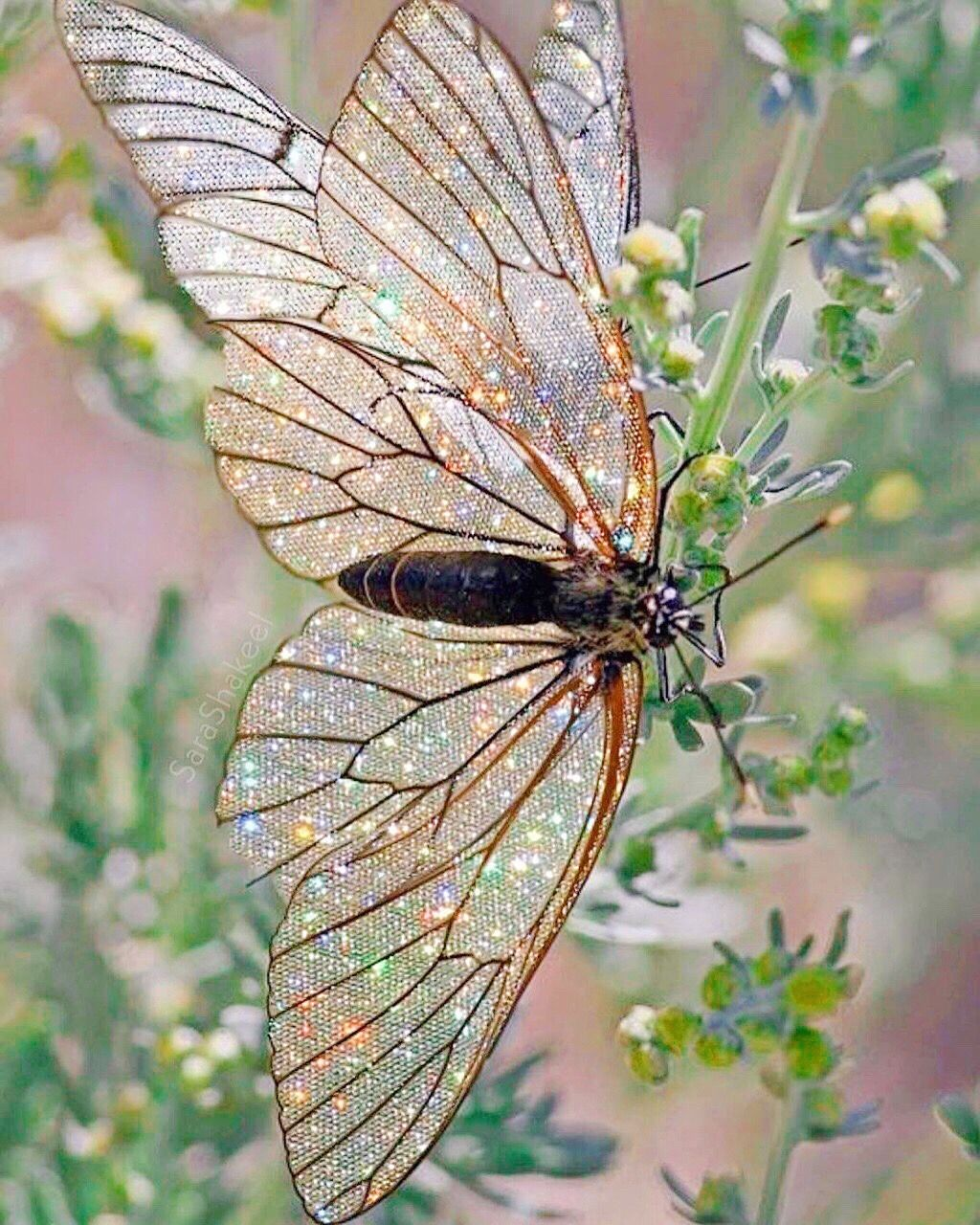 Photos image by Patricia Lake | Beautiful butterflies ...