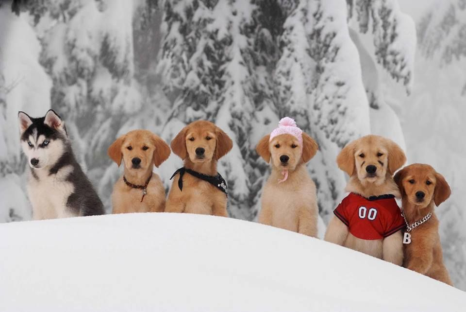 Pin By Mary Holloway On My Kind Of Kid Dog Movies Animals