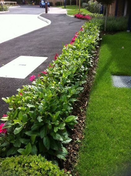 Step-over hedges are becoming popular on new housing estates; used to separate front gardens from the pavement or road. hedges are becoming popular on new housing estates; used to separate front gardens from the pavement or road.