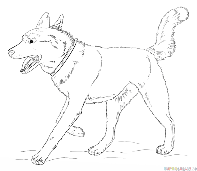 How To Draw A Siberian Husky Step By Step Drawing Tutorials Dog Coloring Page Animal Coloring Pages Horse Coloring Pages