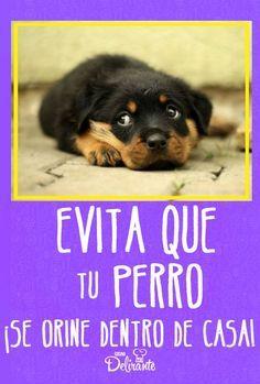 Pin En Orina De Perro