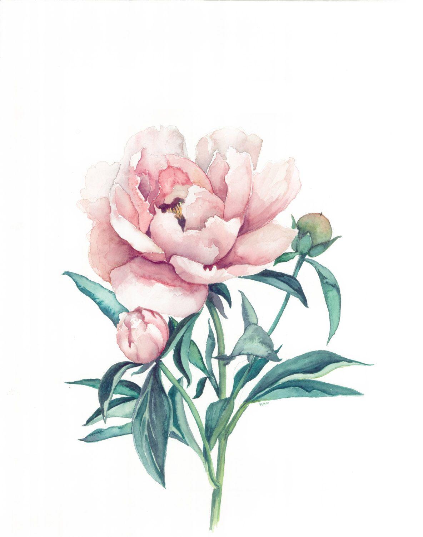 Peony Watercolor Flower Tattoos: Peony Drawing, Peony Illustration, Peonies