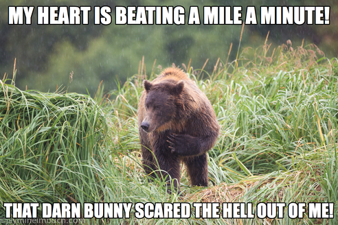 Caption Contest Winners! What Is This Grizzly Bear