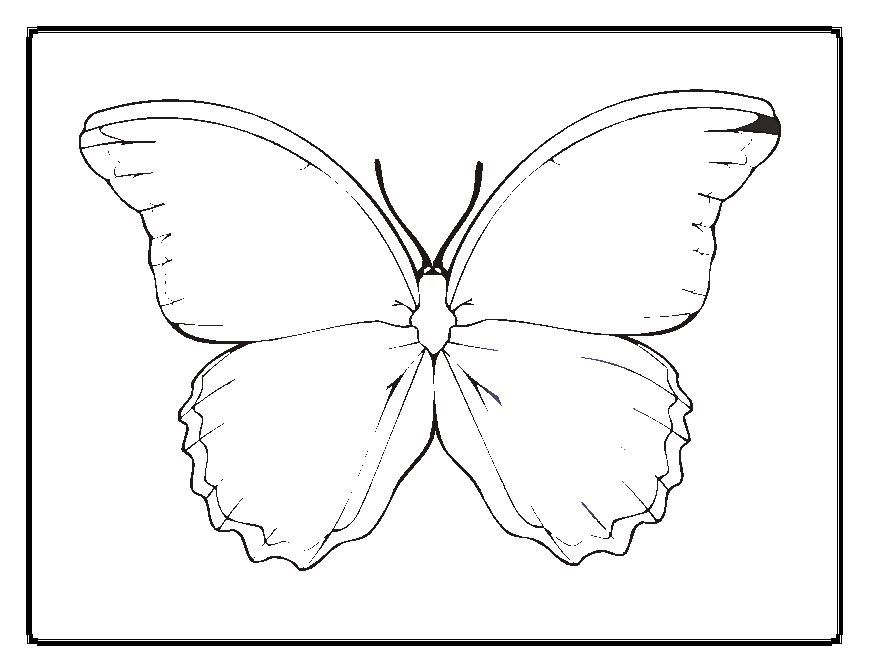 Blank Butterfly Coloring Pages Butterfly Coloring Page Coloring