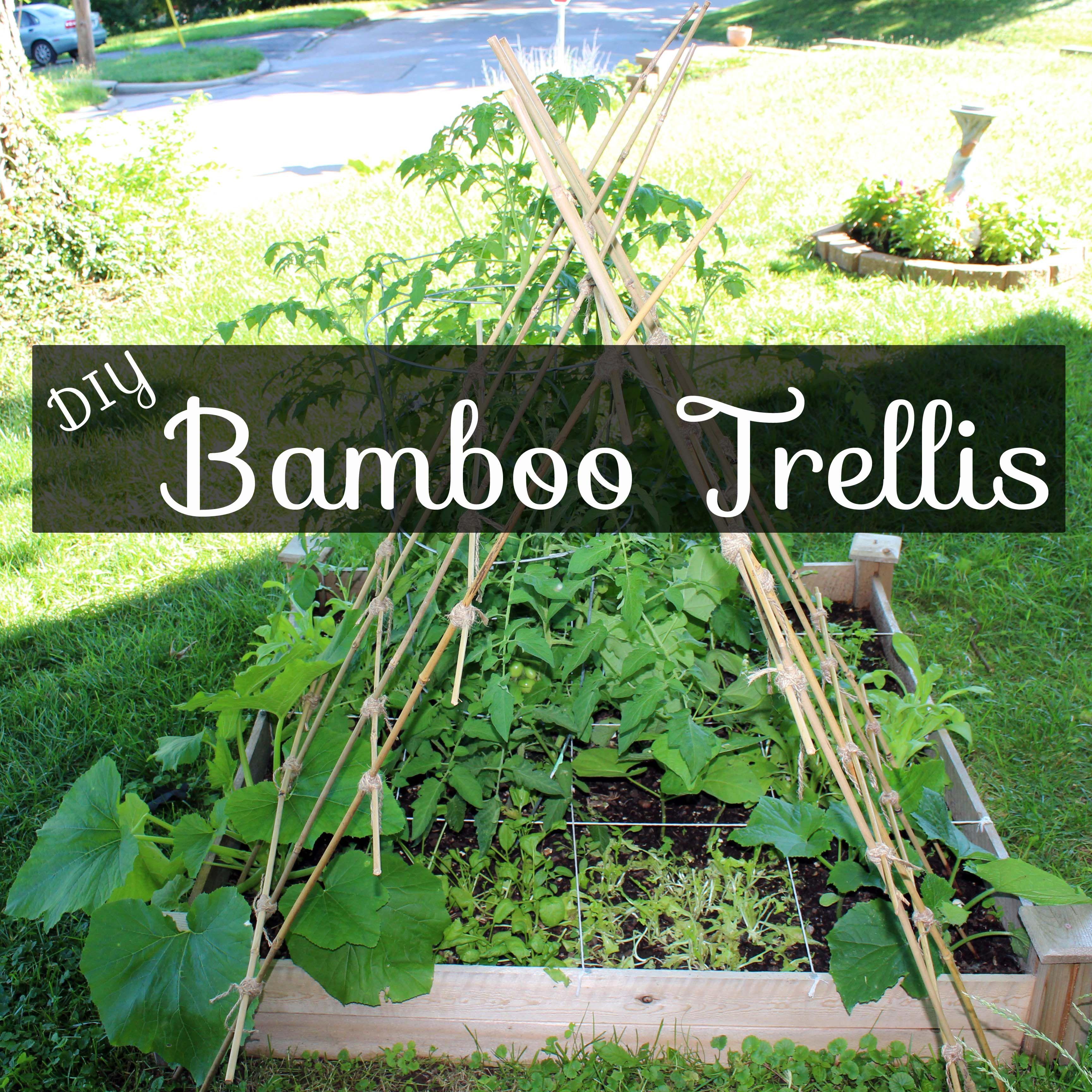 Diy Bamboo Garden Trellis Bamboo Garden Diy Garden Trellis