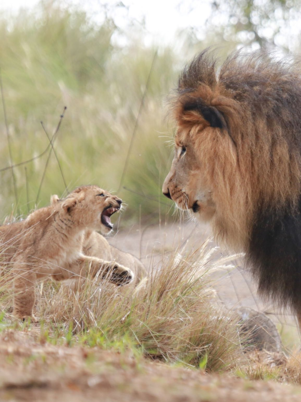 Go Away Now I Like You No More Bigcatfamily Big Cat Family