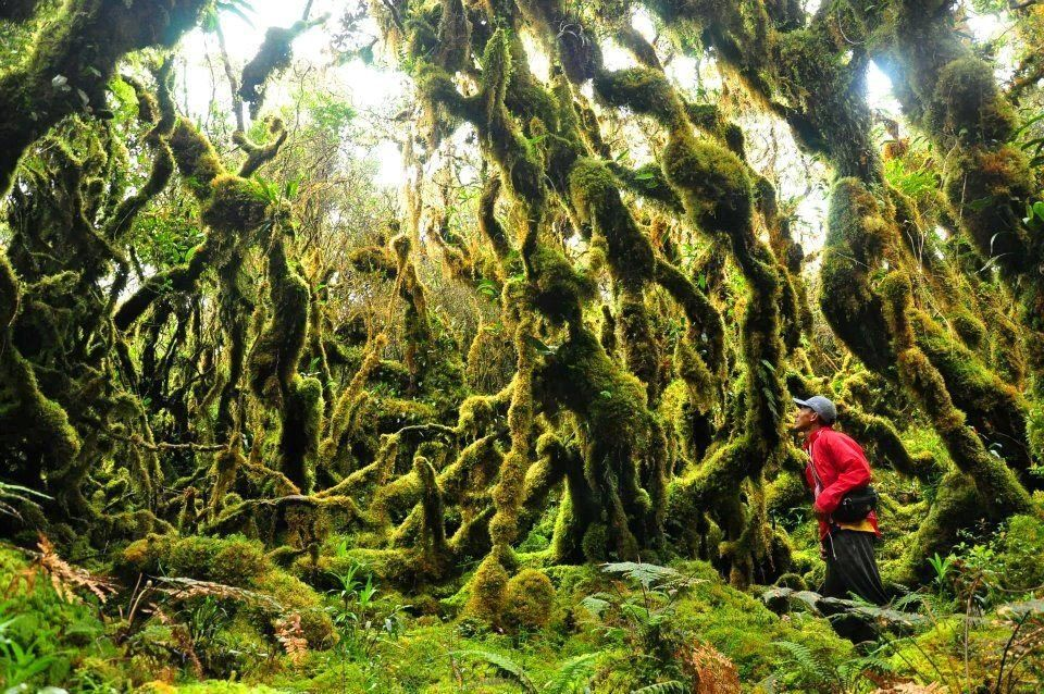 Mossy forest (White Peak),Cagayan Valley Province, Philippines. | Philippines travel, Philippines destinations, Philippines culture