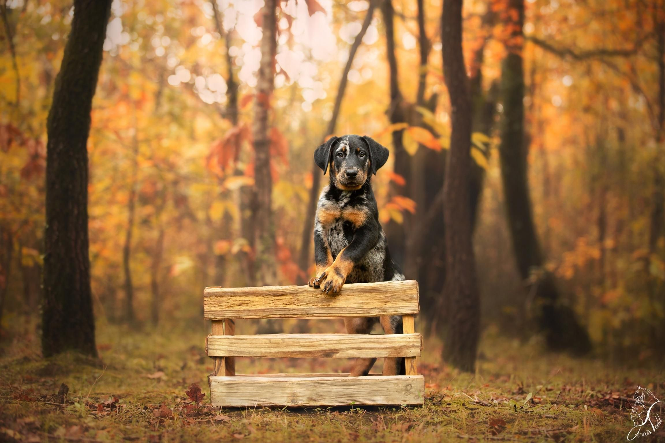 Happy new year dogpictures dogs aww cuteanimals