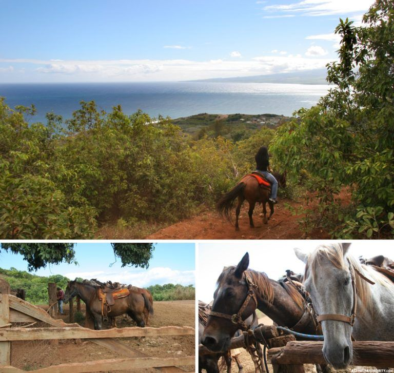 Maui Horseback Riding Tickets