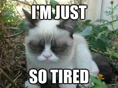 I M Just So Sleepy Grumpy Cat Grumpy Cat Meme Cats