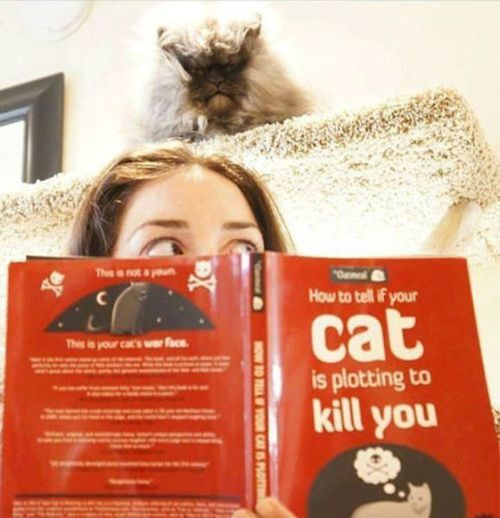 Really? The book was necessary? Because the cat glaring at you like a demon possessed MURDERER isn't enough proof?!