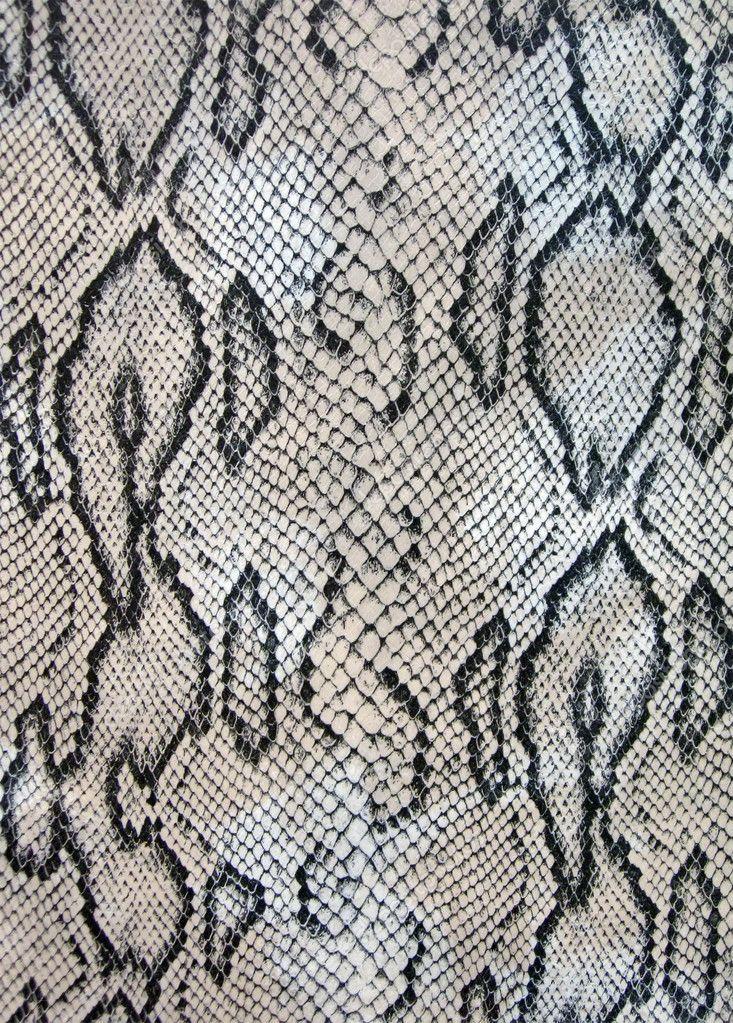 Snake Texture Concept Dangerous Macro Stock Photo Sponsored