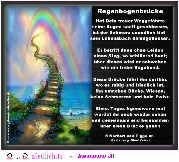 Regenbogenbrücke Tröstende Worte Trauer Trauer Zitate Und