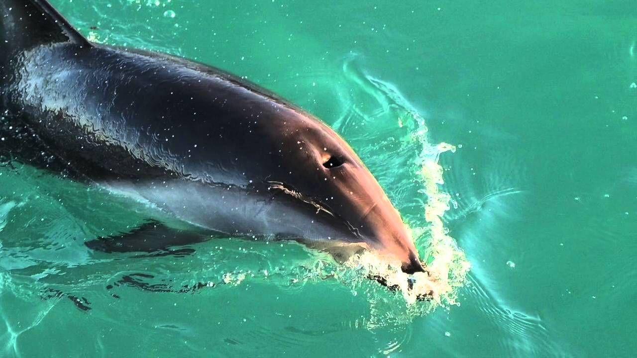 14+ What animals use echolocation ideas