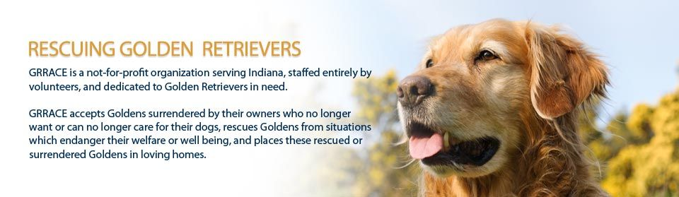 Grrace Golden Retriever Rescue And Community Education Rescue A