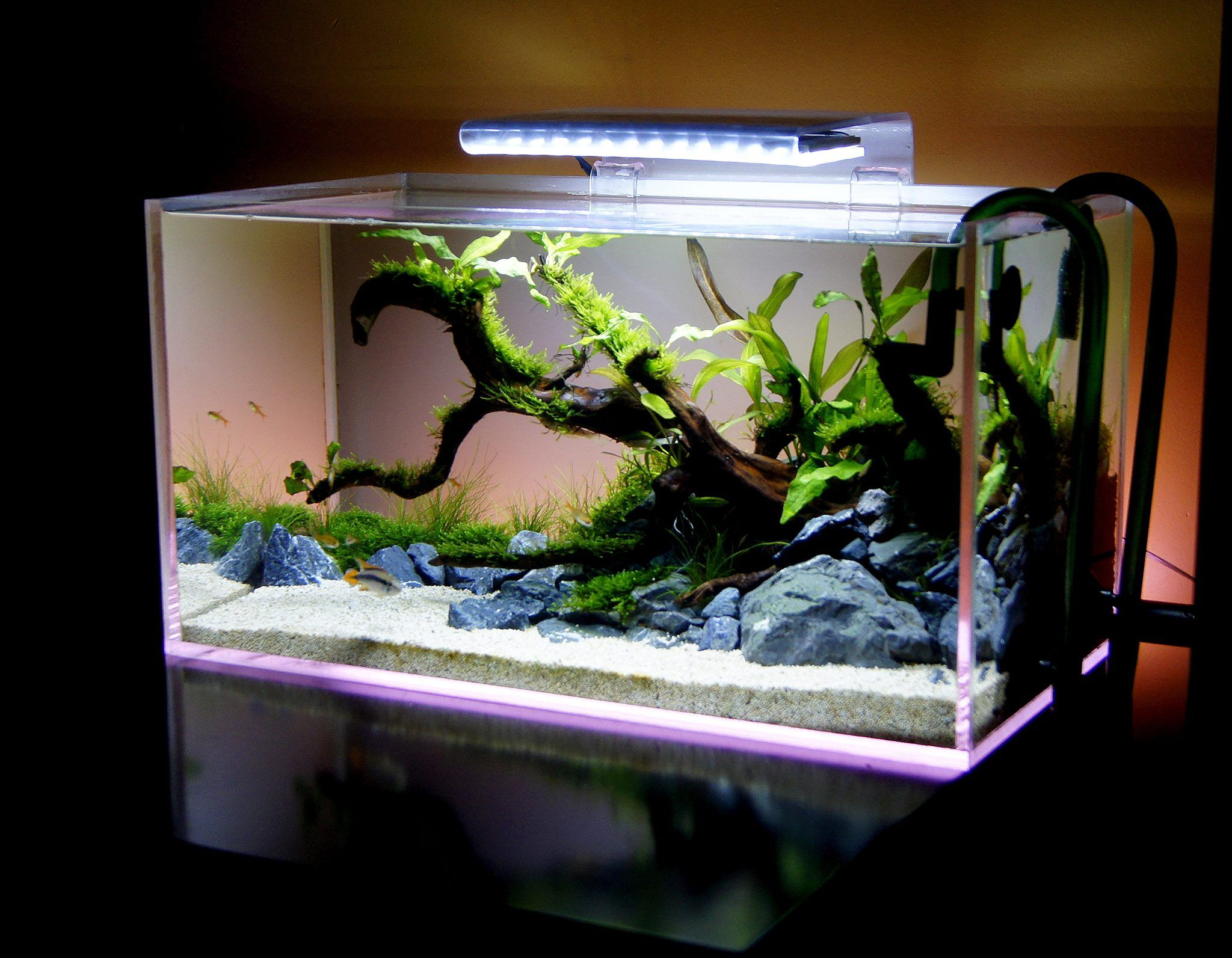 Fish aquariums for sale near me water world prism for Aquariums for sale near me