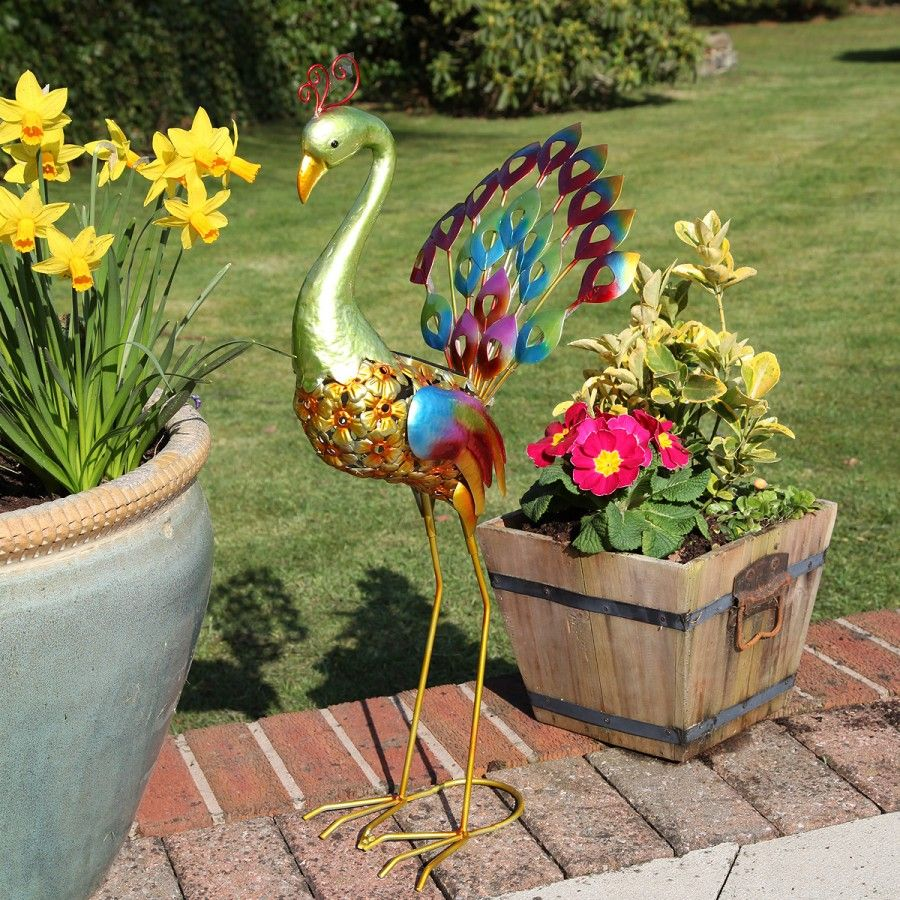 Brighten your garden with this beautifully bright coloured peacock ...