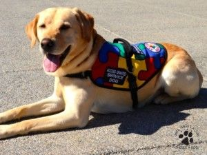 How To Prepare For The Cost Of A Service Dog Service Dogs By Sdwr Autism Diabetes Autism Service Dogs Service Dogs Service Dog Vests