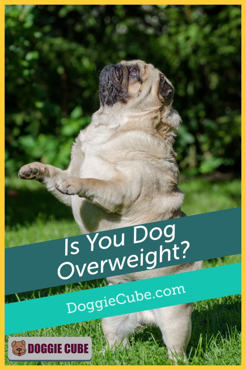 Is your dog overweight doggie cube in 2020 dog