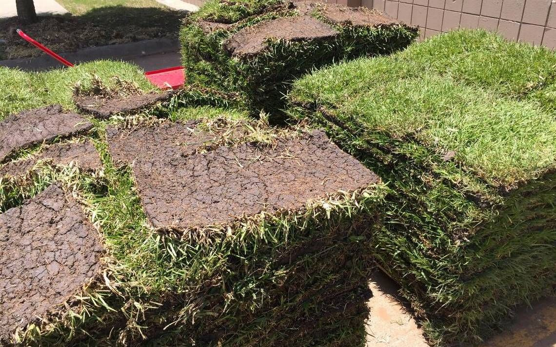 Get new grass up and running with tips on turf type